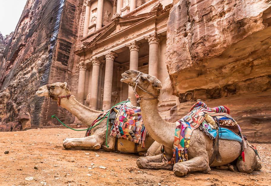 Kamele vor Petra in Jordanien